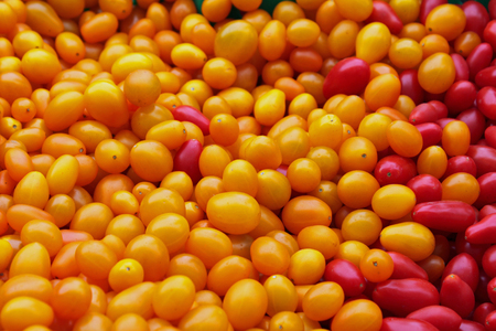 jellybean: Closeup of Red and Yellow Jellybean Tomatoes