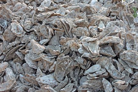 discard: Closeup of a Discard Pile of Oyster Shells Stock Photo