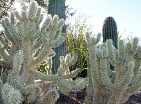 sonora: Various Cactus Plants in the Sonora Desert Stock Photo