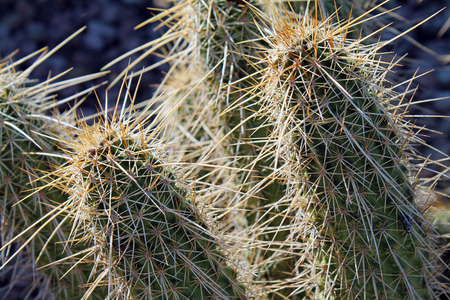 sonoran desert: Sunlit Cactus in the Sonoran Desert
