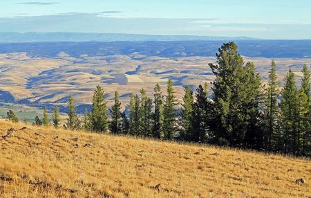 미국, 오리건 주, 월 워아 밸리에 상록수가있는 나무를 바라본다.