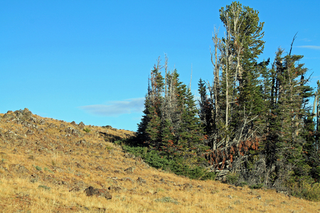 hillside: Rocky Hillside with Scraggly Evergreen Trees in Eastern Oregon, USA