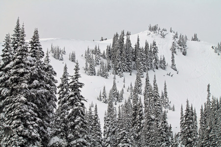 laden: Snow Covered Hill with Snow Laden Evergreen Trees