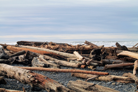 beachcomb: Driftwood Logs Covering a Beach