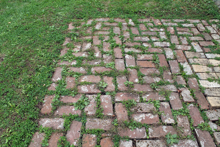 pavers: Red Brick Patio with Grass Growing Between the Pavers