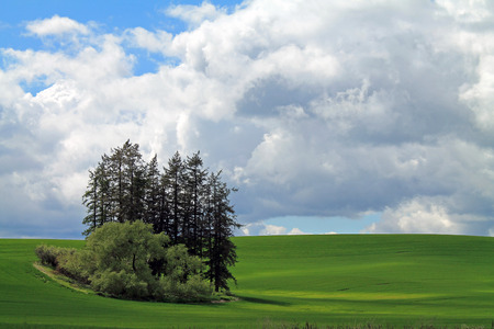 A Stand of Trees in the Middle of ROlling Farm Fields on a Cloudy Day Stock Photo