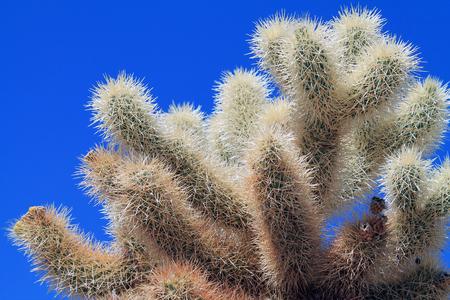 Closeup of a Sunlit Joshua Tree