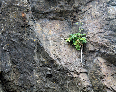 Green Plant Growing on the Face of a Rock Hillside