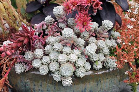 planter: Ceramic Planter of Succulents