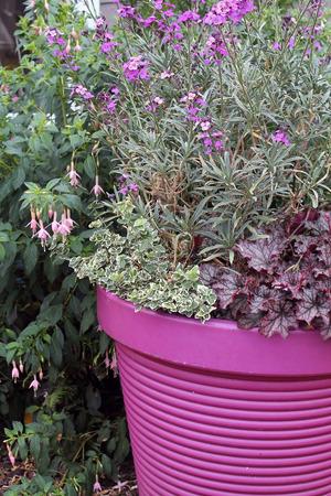 Purple Ceramic Planter with Purple Flowers Stock Photo