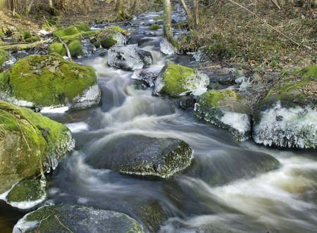 streamlet: River in forest