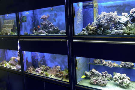 flavescens: A locol Aquarium with fishcoral