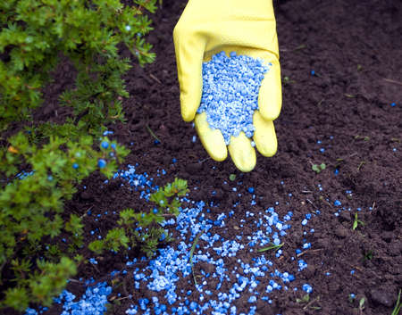 chemical fertilizer: Fertilizer to pour in hands