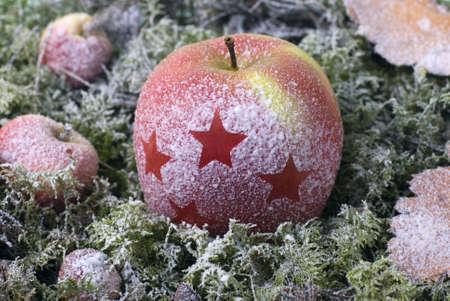christmas apple: la mela di Natale sono coperti di brina