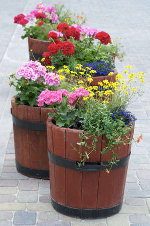 old container: flowers in city