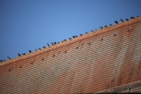 a lot of birds sitting on a red roof  blue sky in the background   photo