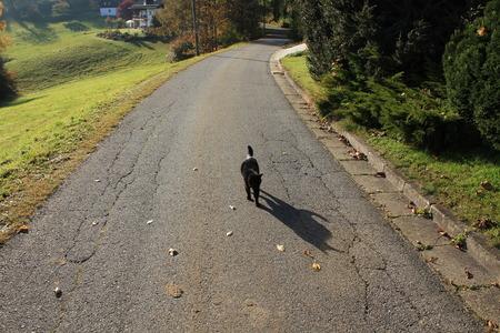 a cat walks down the street in autumn photo