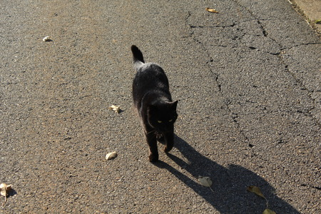 a black cat walks down a road at the end of the day  photo