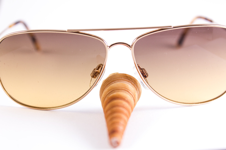 cone shaped: cone shaped bivalve with stripes and brown sunglasses