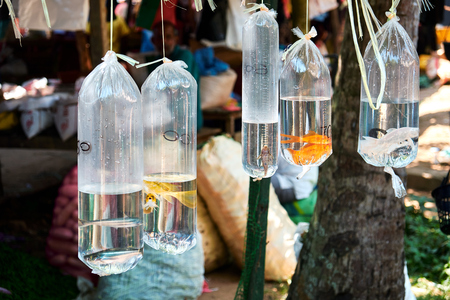 Goldfish en Platic Bag Hanging Oriental Zoo Market. Tienda de mascotas al por menor de Tropical Street para pasatiempos acuáticos. Pequeño Aqua Bazaar asiático tradicional para el turismo urbano. Comercio de animales coloridos Foto de archivo
