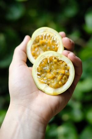 Hand Holding Maracuja Passionfruit Half Cut Side Stok Fotoğraf