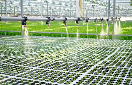 Watering Young Plants Sprout in Potty Greenhouse. Seeding Braird Produce Grown in Block. Hot House with Regulated Climatic Temperature Conditions for Growing and Water Machine Irrigation