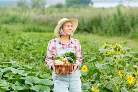 Woman Holding a Basket full of Harvest Organic Vegetables and Root on Organic Bio Farm. Autumn Vegetable Harvest.