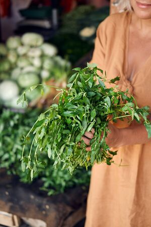 Farmer Hold Fresh Green Ponnanganni Keerai in Hand. Tropical Indian Organic Vegetable Harvest at Local Market. Exotic Flavoring Leaf for Soup. Natural Healthy Nutrition Vitamin Cuisine