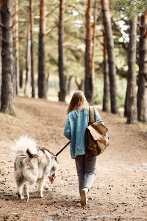 Woman Walking Dog. Young Girl with her Dog, Alaskan Malamute, Outdoor at Autumn. Domestic pet. Husky