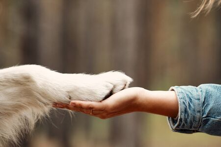 Dog is giving paw to the woman. Dogs paw in humans hand. Domestic pet.