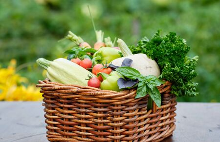 Basket full of Harvest Organic Vegetables and Root in a Garden. Autumn Vegetable Harvest. Zdjęcie Seryjne