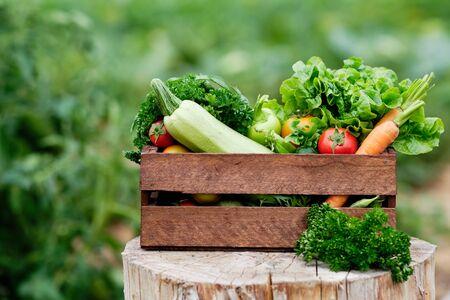 Basket full of Harvest Organic Vegetables and Root on Organic Bio Farm. Autumn Vegetable Harvest.