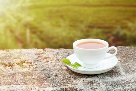 White Drink Cup Isolated on Plantation Background. Ceramic Mug with Freshness Sweet Hot Beverage Decorated Green Leaves Tea on Plate. Traditional Energy Aromatic Breakfast Nutrition Stok Fotoğraf