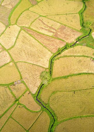 Paddy Plant Plantation Flat Lay Airscape Photo. Countryside Rice Food Agricultural Field Production and River Natural. Terrace Farm Cultivated Landscape Drone Top View Aerial Shot Photography Stok Fotoğraf