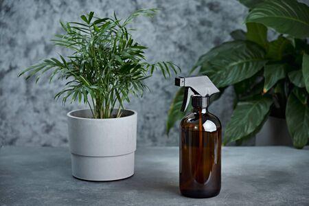 Glass sprayer and house plant on a table. 免版税图像