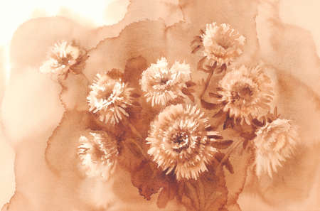 aster: white asters watercolor background