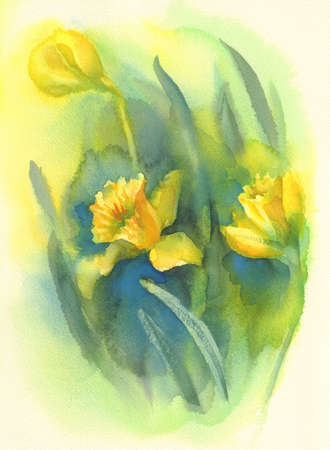 Yellow narcissus greens background watercolor