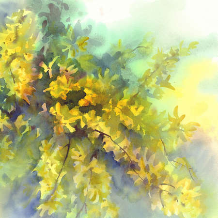 forsythia: forsythia yellow flowers watercolor background