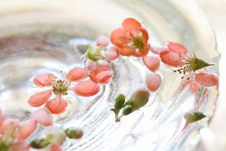 membrillo: quince flowers floating in water, glass vase Foto de archivo