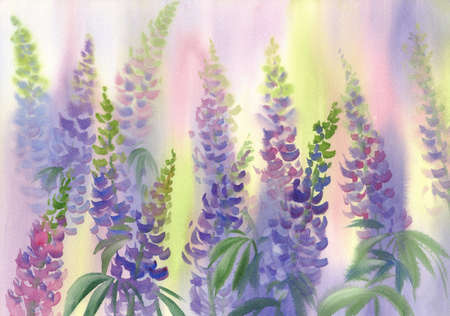 pink and violet lupine flowers watercolor background