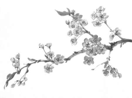 A sakura tree branch in bloom. Traditional chinese painting