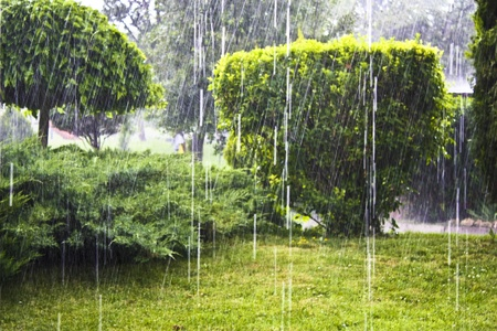 raining cats and dogs photo