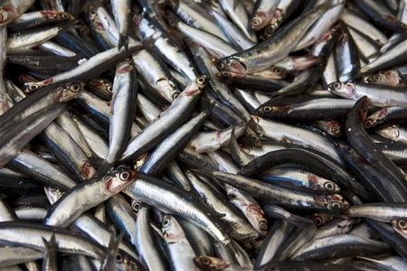 anchovy fish: fresh anchovy fish Stock Photo