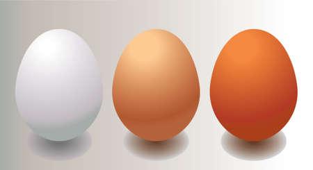 brown egg: brown, light brown and white egg. vector illustration