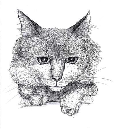 ink sketch: Portrait of a cat, black ink sketch Archivio Fotografico