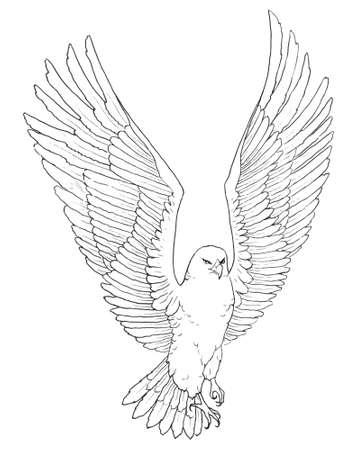 Illustrazione di schizzo di un'aquila bella impennata