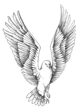 Sketch illustration of a soaring beautiful eagle