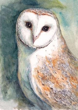 Watercolor painting of Beautiful portrait of barn owl Stok Fotoğraf