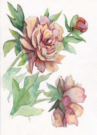 Pink peony with leaves. Hand drawn illustration in watercolor.