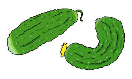 two organic cucumbers closeup on white background